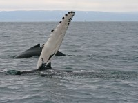 Best whale spotting places in the Caribbean