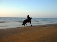 Guide to Horse Riding in the Caribbean